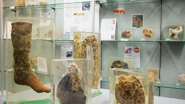 photo of specimens in the museum