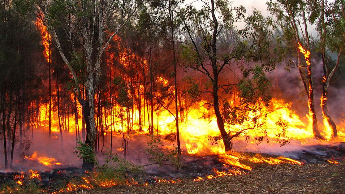 a photo of a bush fire